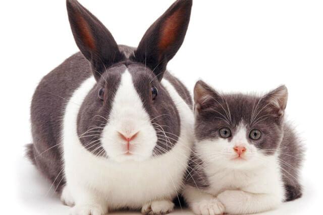 Гороскоп на 2021 год для Кролика (Кота)3