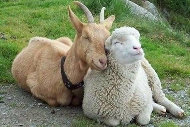 Гороскоп на 2021 год для Козы (Овцы)3